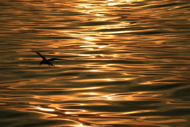 Bird silhouette against sea water surface with gentle ripples in morning sunlight reflections