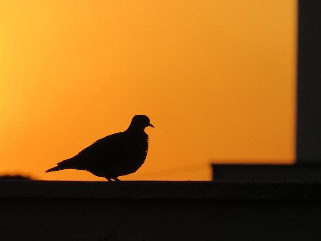 Силуэт птицы в конце дня на закате