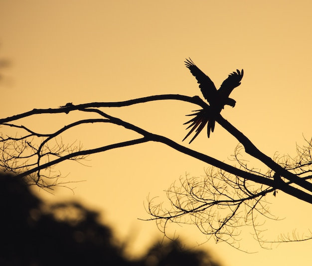 Bird silhouetteanimal and flying