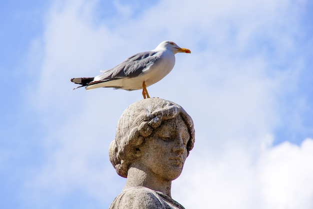 The bird sits on the head of the statue