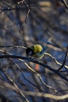 鳥は木の枝に座っています