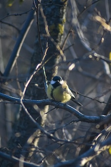 Bird sits on a tree branch