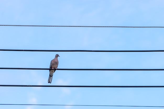 Bird sitting on electrical cable isolated with blue sky.