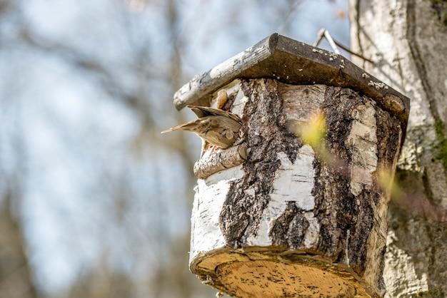 Птица сидит на скворечнике на дереве в саду, сделанном из выдолбленной части ствола дерева