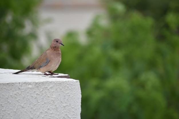 Terrece에 앉아있는 새