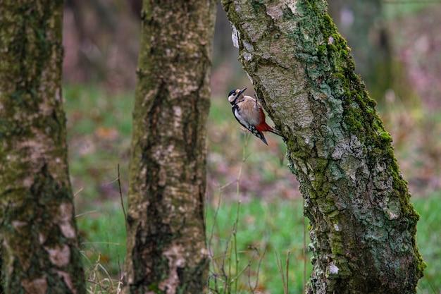 Птица сидит на поверхности дерева в окружении других деревьев