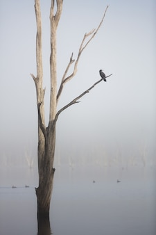 A bird sitting on the tree in lake moogerah on a foggy morning, queensland, australia