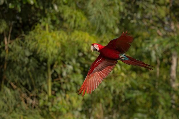 Bird of south america in the nature habitat