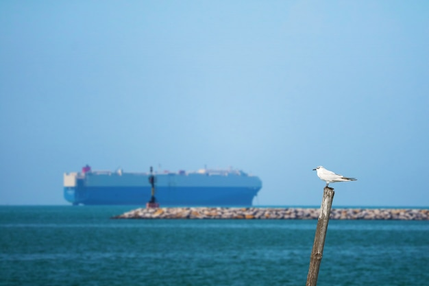 Bird standing on bamboo on sea and blur cargo ship parking