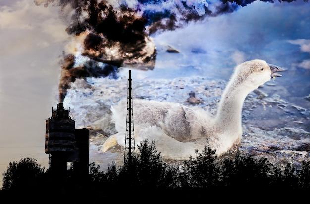 鳥はタールで汚染された水に閉じ込められました。背景のファクトリーパイプ。産業廃棄物で死にかけている動物。油で汚れた川や海。環境問題。有害な人間。生態学的災害。