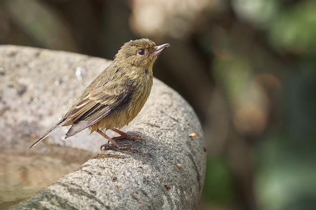 Птица принимает ванну под солнцем накаливания