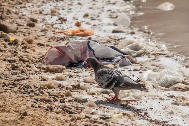 鳥は死海の岸に横たわっているゴミのゴミの中のビーチを歩く生態学的問題