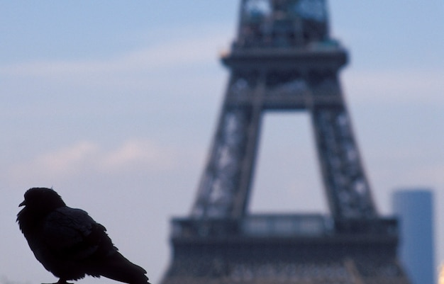 Bird on wall with eiffel tower in background, paris, france