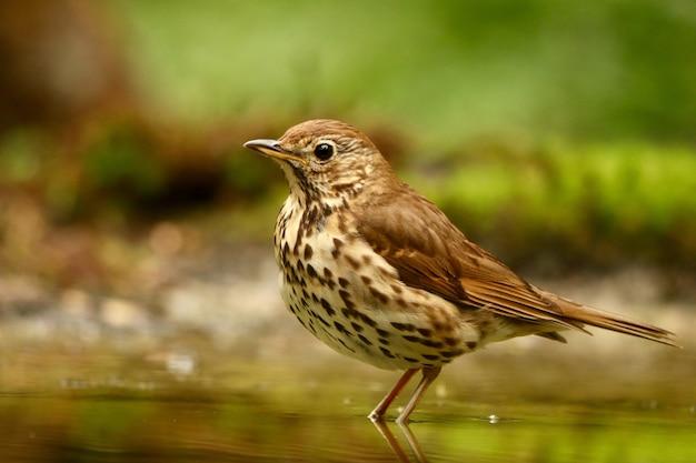 Uccello nell'acqua