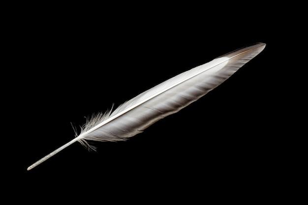 검은 배경에 고립 된 새 날개 깃털