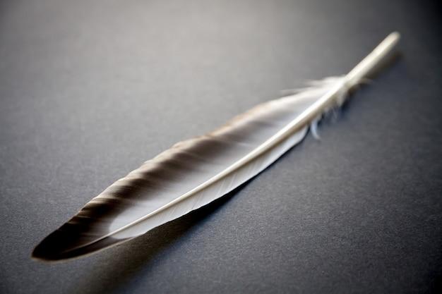 회색 배경에 쉬고 새 날개 깃털