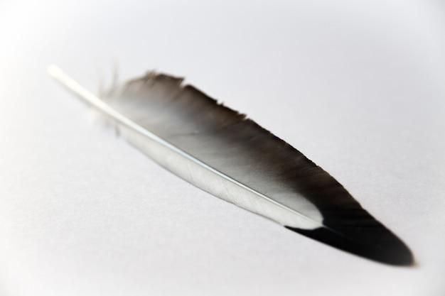 회색 배경에 쉬고 있는 새 날개 깃털