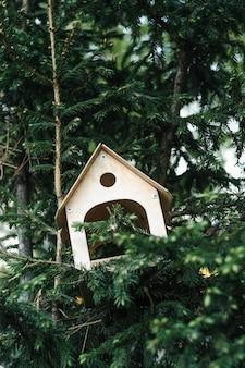 Birdhouse on branch of coniferous tree in urban environment