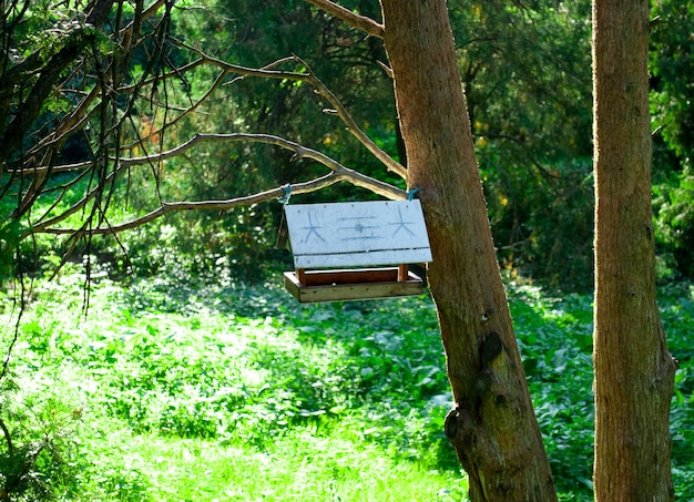 Скворечник в лесу на дереве в солнечный день
