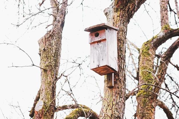 春先または秋の鳥と自然の木の上の巣箱