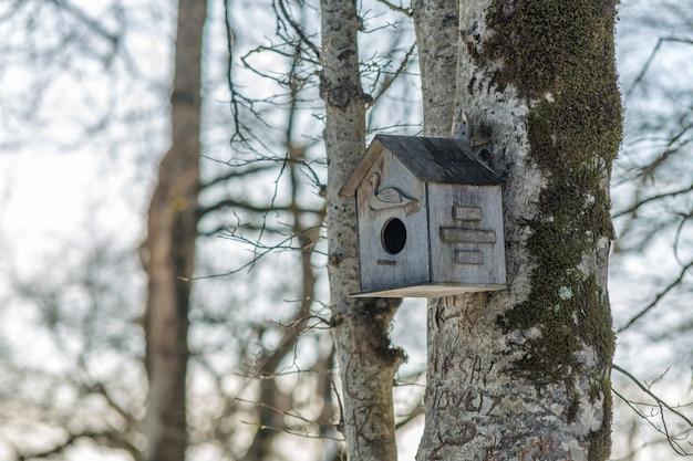 숲 속의 나무 위 새집, 새를 위해 사람들이 만든 집, 봄이 오고 있습니다. 야생 동물 보호 및 기후 변화 문제.