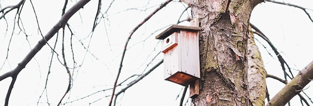 Birdhouse on the tree in early spring or autumn birds and nature