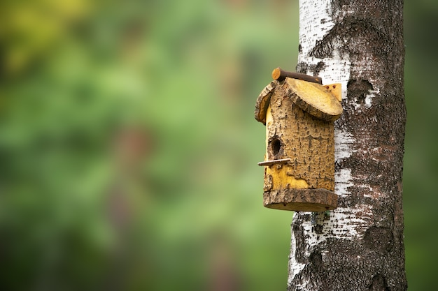 Birdhouse on a tree in the forest