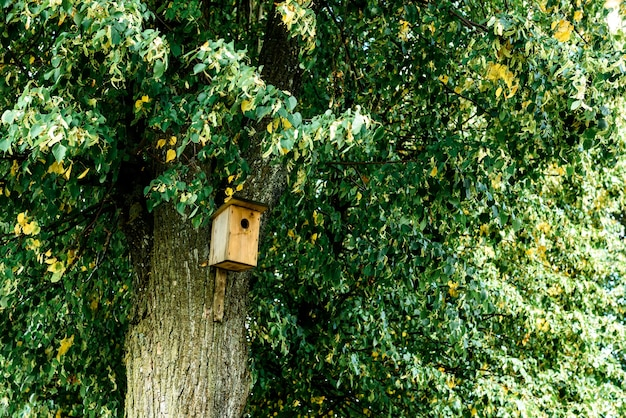 Birdhouse on tree at springtime in early autumn