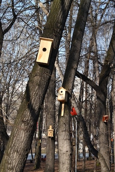 木々の間の公園の巣箱