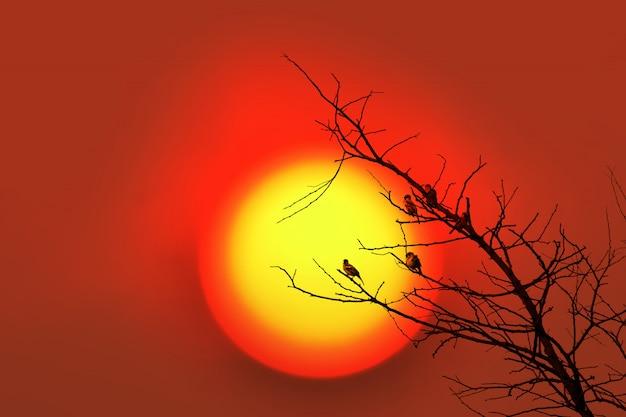 夕日と木の枝に鳥。