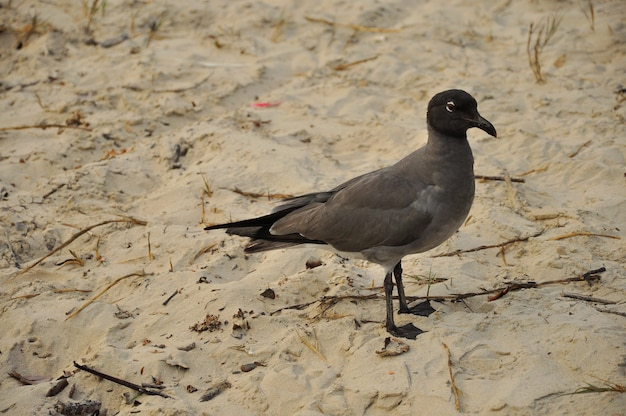 Birds on the beach on the galapagos islands