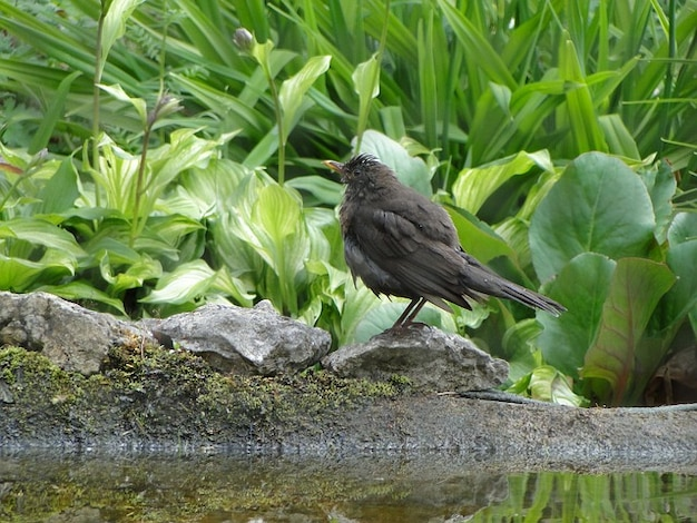 Birds bird blackbird bank blackbirds animal