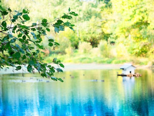 Птичья кабина на фоне паркового озера