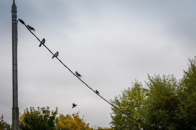 Birds on the cable
