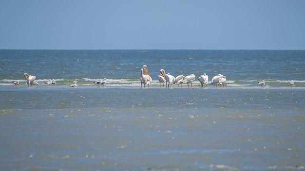 Birds in the danube delta