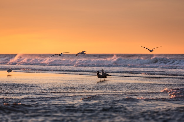 早朝の海辺の鳥