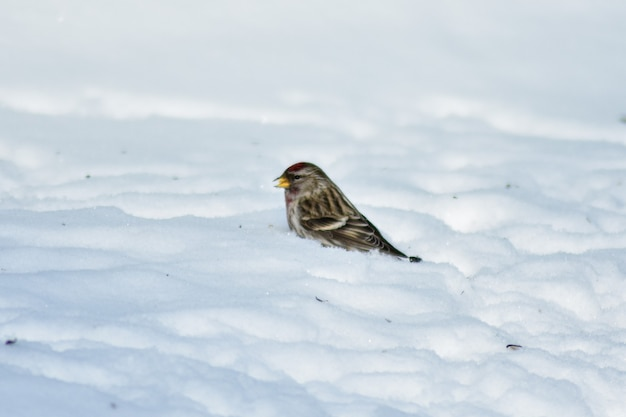 새들은 겨울에 정원에서 씨앗을 먹는다