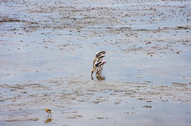 Birds feeding in the sea at bang poo, samut prakan.