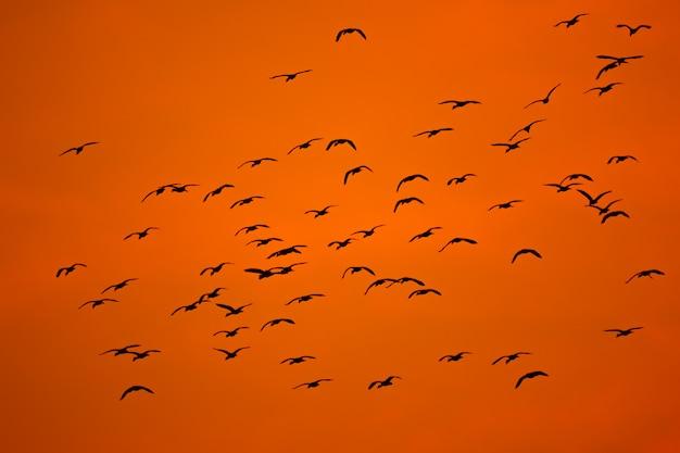 シルエットの空を飛んでいる鳥の群れ Premium写真