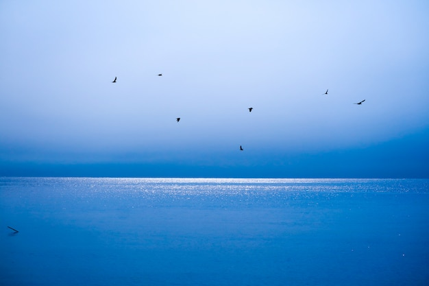 Birds fly away to home over blue sea and blue sky