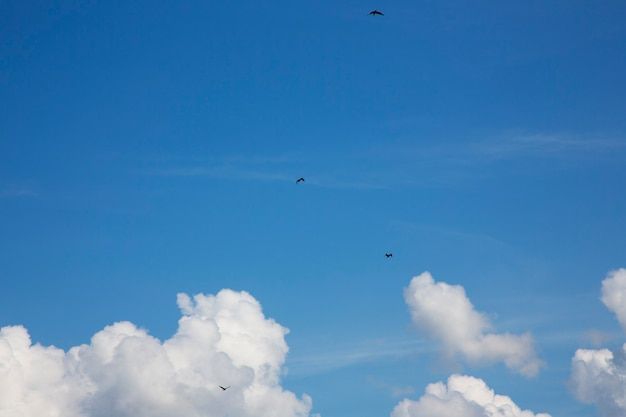새들이 푸른 하늘을 날다 화창한 날 하얀 솜털 구름이 있는 밝은 푸른 하늘
