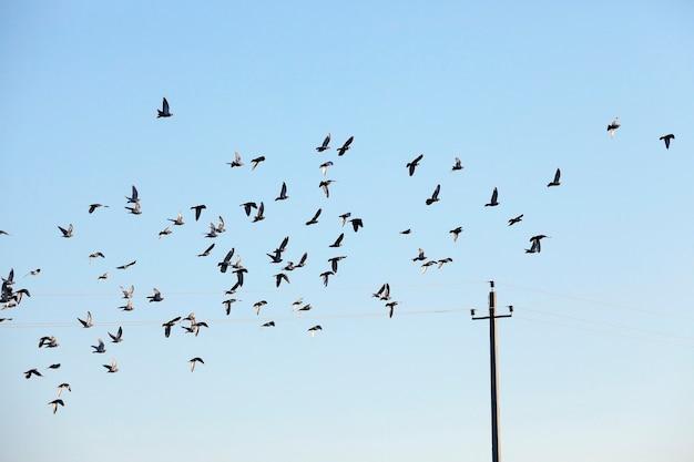 Птицы летают в небе, крупным планом голубое небо, в котором летит стая птиц, видны силуэты, днем,