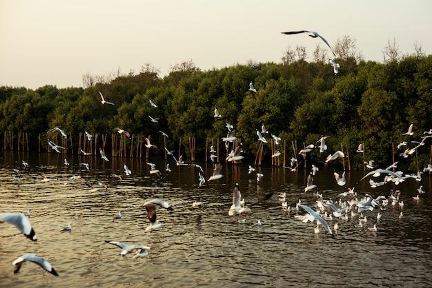 Birds flying above mangrove water
