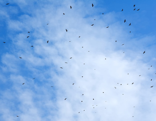 Birds flying in the sky with a clouds in the background.