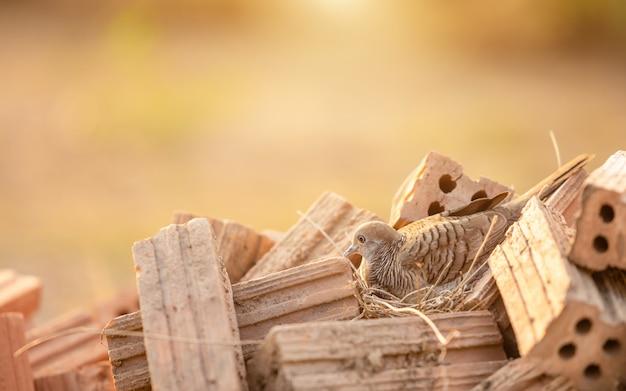 Птицы в коричневой сухой траве гнездятся на куче красного кирпича