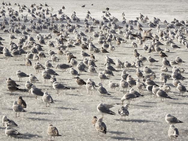 春の鳥。冬の青い水の中のcorの人口。
