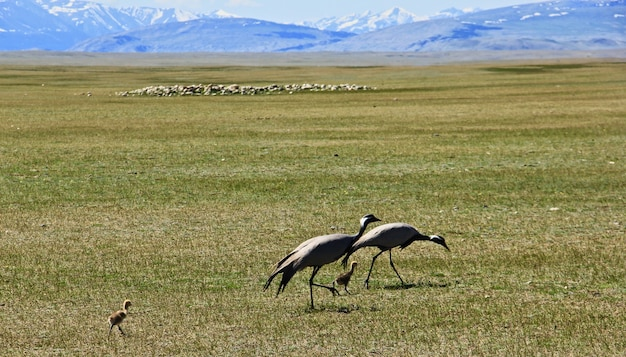 山のある広大な緑の谷の鳥