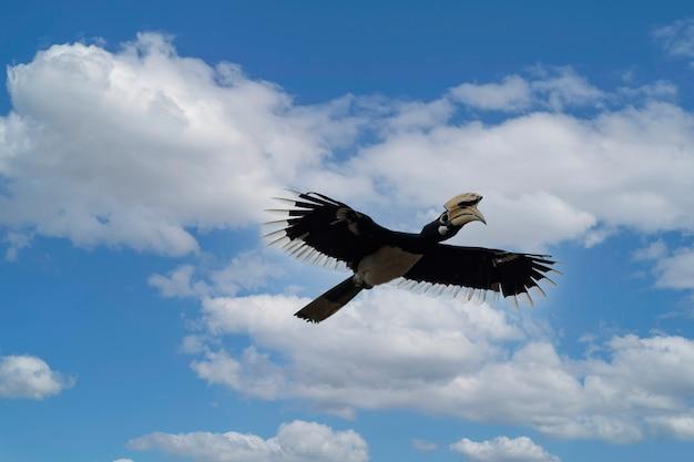 새 일출과 푸른 하늘 배경 위로 이동하는 비행의 큰 그룹