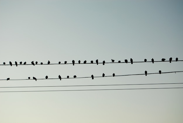 Birds like musical notes