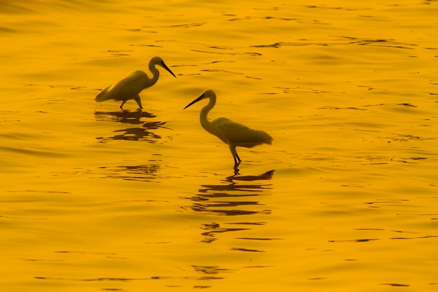 Birds living in the sea at sunset